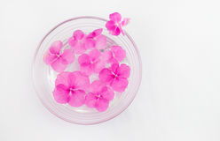 Hortensia flowers floating in a bowl of water Stock Photo