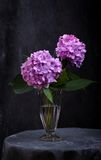 Hortensia flowers in glass vase Stock Image