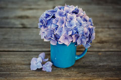 Hortensia Flowers Stock Photo