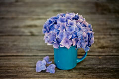 Hortensia Flowers Royalty Free Stock Image