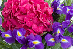 Hortensia and iris flowers background Royalty Free Stock Photo