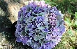Hortensia plant Stock Photography
