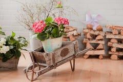 Hortensia rose dans le charriot Photo stock