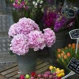 hortensia rose dans une boîte sur une boîte en bois Photo stock