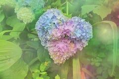 Hortensia sous la forme de coeur Photographie stock libre de droits
