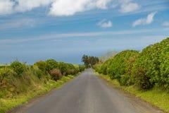 Hortensia växer på ön av Sao Miguel överallt Royaltyfria Foton