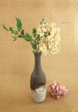 Hortensia vert sec Photographie stock