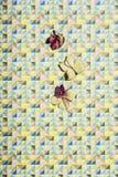 Hortensiablumenblätter auf geometrischem kopiertem buntem Hintergrund lizenzfreie stockfotografie