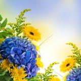 Hortensias bleus et asters jaunes Photographie stock libre de droits