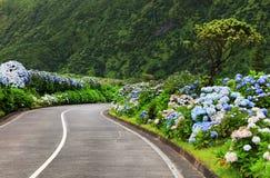 Wonderful road in Sao Miguel Island stock image