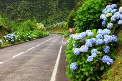Wonderful road in Sao Miguel Island stock photography