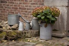 Hortensias dans de vieux pots photographie stock