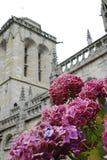 Hortensias e iglesia en Locronan Imágenes de archivo libres de regalías