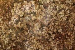 Hortensias secadas en fondo texturizado Imágenes de archivo libres de regalías