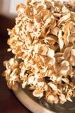Hortensias secados como ornamento para el adornamiento casero Foto de archivo libre de regalías