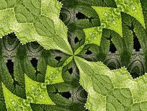 Hortensie-Kaleidoskop Lizenzfreie Stockfotografie