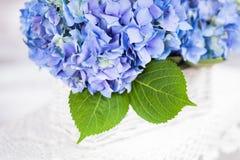 Hortensieblumen Stockbilder