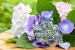 Hortensieblumen auf Holztisch Stockfotografie