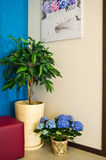 Hortensieblumen in einer modernen Halle Stockfotografie