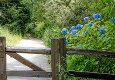 Hortensiebusch hinter einem Zaun horizontal stockfotografie