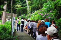 Hortensiegarten in Japan Lizenzfreie Stockbilder