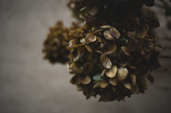 Hortensja kwiatów głowy fotografia stock