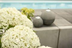 Hortensje i dekoracja przy pływackiego basenu selekcyjną ostrością zdjęcie royalty free
