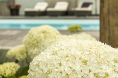 Hortensje i dekoracja przy pływackiego basenu selekcyjną ostrością zdjęcia royalty free
