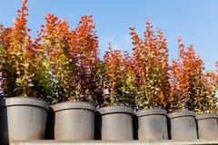 Horticultura en potes, tienda de la planta de cuarto de niños del jardín foto de archivo