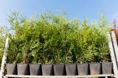 Horticultura en potes, tienda de la planta de cuarto de ni?os del jard?n fotografía de archivo libre de regalías