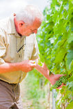 Horticultural examination Stock Image