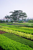Horticultural farm Royalty Free Stock Image