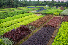 Horticultural farm Royalty Free Stock Photo