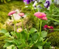 Horticulture de ressort extérieure Photographie stock