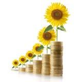Horticulture de Sun des pièces de monnaie Image stock