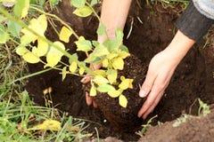 Horticulture en automne photos stock