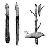 Horticulture engraving - grafting techniques  and grafting knive Stock Photography