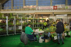 Horticulture fair Royalty Free Stock Image