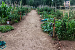 Horticulture garden Stock Images