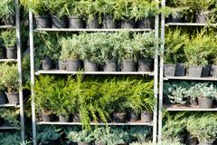 Horticulture garden shop, beauty botanical nursery plants.  royalty free stock image