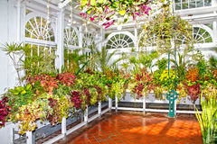 Horticulture plants and flowers. Horticulture, colourful plants and flowers in a greenhouse stock image