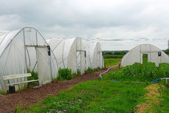 Horticulture in plastic tents. Plastic tent horticulture of an ecological and therapeutical garden in the Netherlands Royalty Free Stock Image