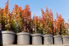 Horticulture in pots, garden nursery plant store.  stock photo