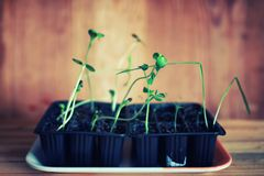 Seedling pots land royalty free stock photography