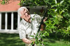 Horticulturist cutting tree branch Stock Photography