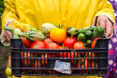 Horticulturist holding fresh vegetables Royalty Free Stock Images