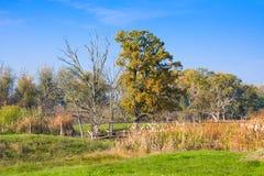 Hortobagy nationalpark, Ungern Det är Unesco-världsarvet efter 1999 Den hela aren Arkivbild