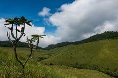 Horton упрощает национальный парк Шри-Ланку стоковая фотография