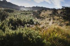 Horton упрощает национальный парк, Шри-Ланку Стоковая Фотография RF