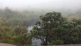 Horton miejsca park narodowy Zdjęcie Royalty Free